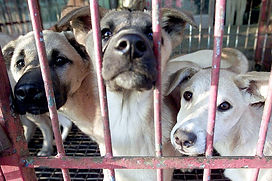 Dogs-are-in-kept-in-a-cage.jpg