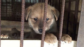 636535279209391174-Dog-in-cage.jpg_width