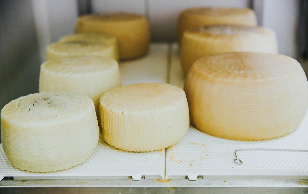 sūriai, VMGonline