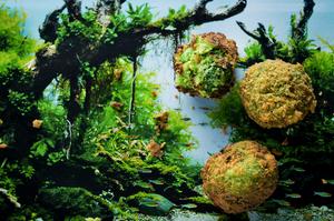 Žalieji falafeliai, vmg receptas