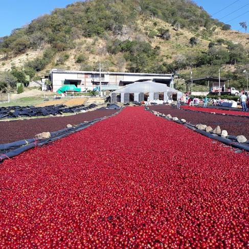 """Pasaulis kavos puodelyje: """"Vero Cafe"""" kviečia keliauti į Nikaragvą"""