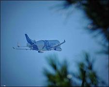 Airbus Beluga XL // Toulouse (France) // Juillet 2020
