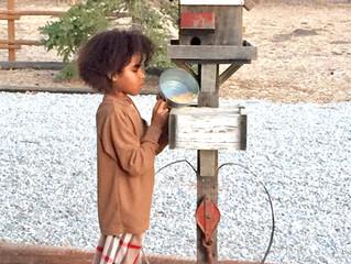 Kids Love The New Birdhouses