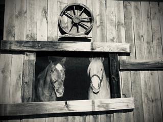 New Horses at TBRAGT -- Meet Jolene and Royce