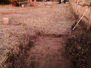Digging has started as we begin to fashion our Haunted Mini Golf Course @ Teddy Bear's Ranch and