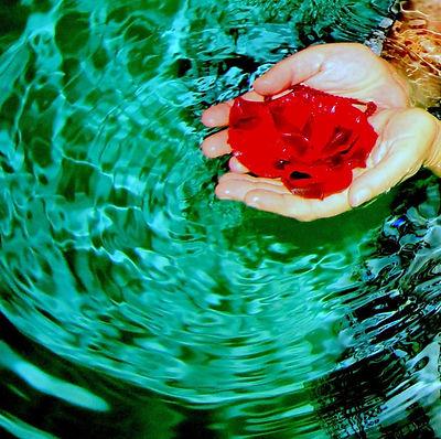 Flower in Water Dee Hill