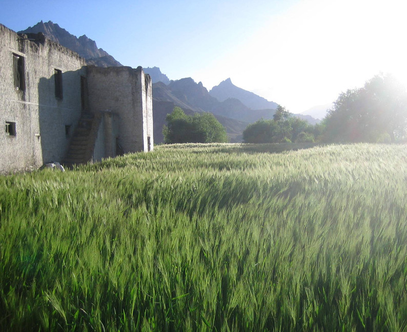 Mulbekh barley fields.