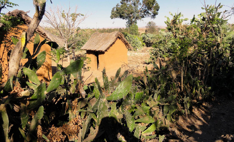 Village among cactuses