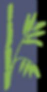 logo bambu png-01.png