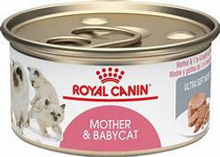 mother & Baby cat.jpg
