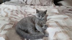 amelia comfy