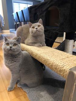 Amelia and Georgie