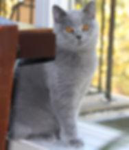 Amelia 6 months old.jpg