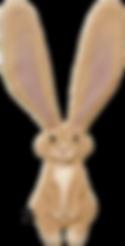 ウサギオレンジ表SS.png
