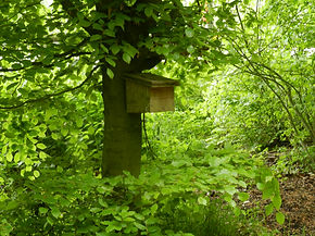 Dormouse box in one of the monitoring woodlands (by Pete Newbold)