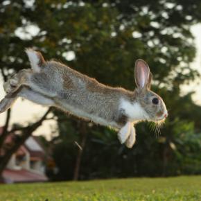 Simon shares 7 wild ways to exercise your rabbit