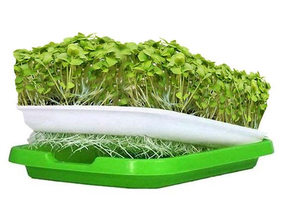 D.I.Y. Grow Kit (Organic Basil)