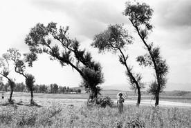 한강 뚝섬 포플러나무와 여인