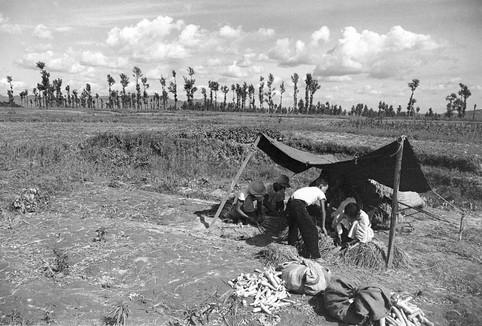 뚝섬에서 농작물 수확