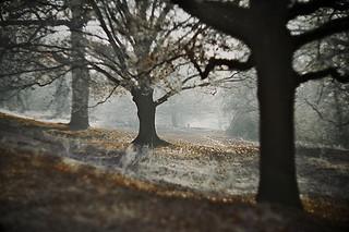 land84.jpg