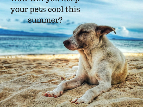 Keeping Your Pets Cool