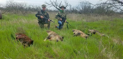 Lazy S Ranch Hog Hunting