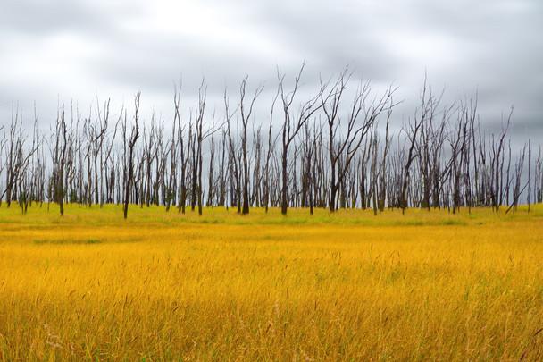 Waimea Grassland