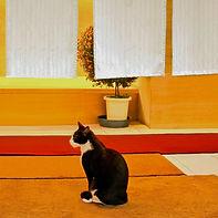 2011Japan - Cat in Doorway-2.jpg