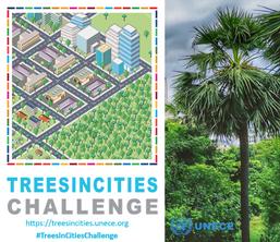 Trees in Cities Challenge