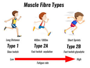 Muscle Fiber Type: Did You Choose Your Sport or Did Your Sport Choose You?