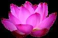 png-lotus-flower-blue-lotus-png-flower-1