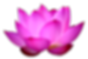 png-lotus-flower-blue-lotus-png-flower-1