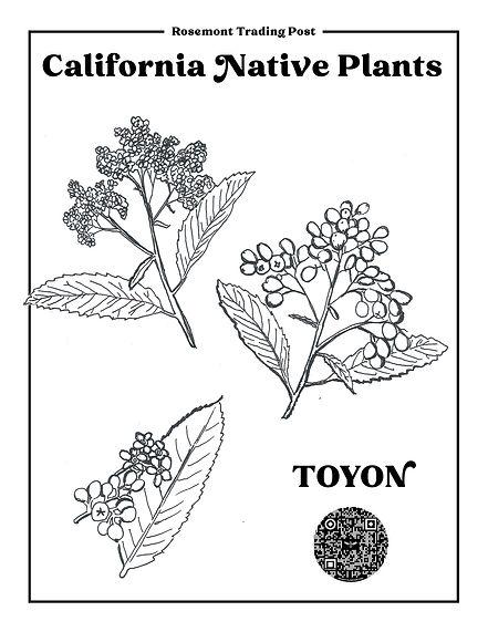 RTP-COLOR-PAGES-TOYON.jpg