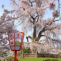 기온, 마루야마공원