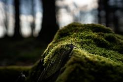 Forêt domaniale du Perche et de la Trappe