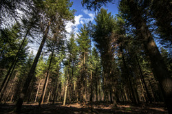 Forêt de Senonche