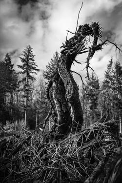 Forêt de Champigny (27)
