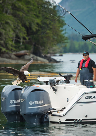 Bald eagle snags a meal off Grady White boat