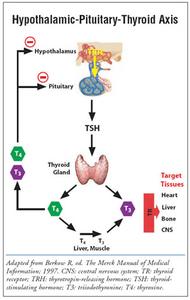 STRESS - Thyroid Health & Adrenal Fatigue - Video Class