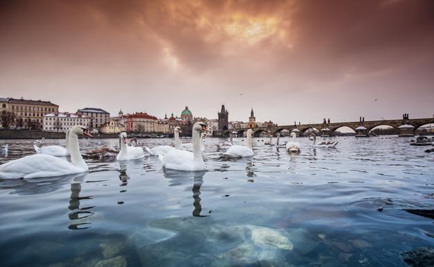 Old_Prague_winter_snow_river_swans_2.jpg