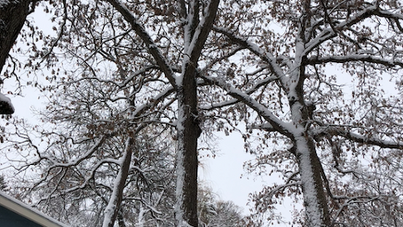 Reviews, releases, and a lot of snow