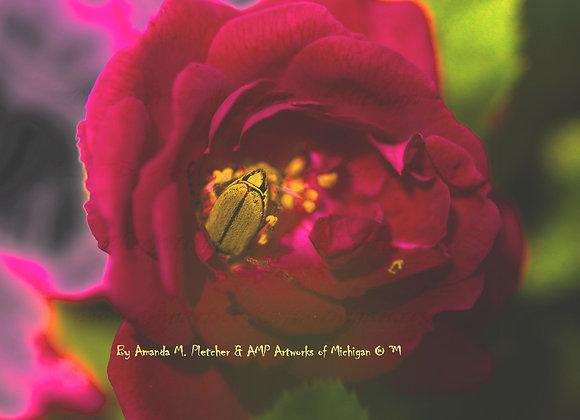 Michigan Flowers: 2017 Art Photography Image (SINGLE) By Amanda M. Pletcher