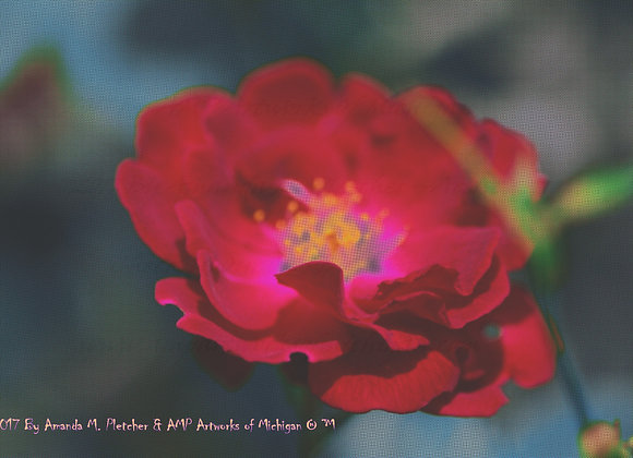 Michigan Flowers: 2017 Art Photography Image (SINGLE) By Amanda M. Pletcher
