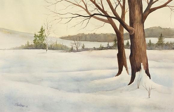 Lone_Birch_by_Scott_Hartman_22X28_price_