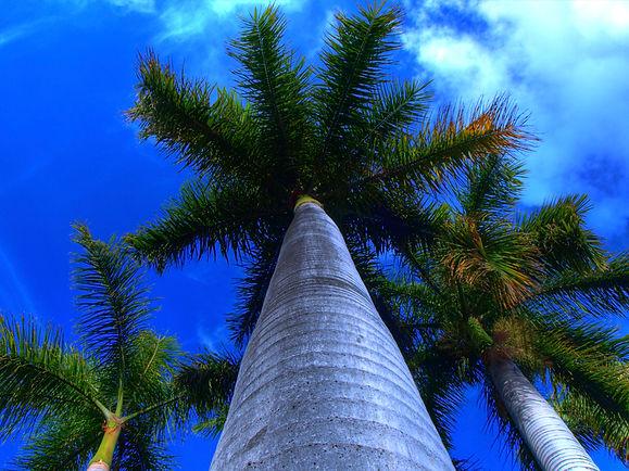 xenotes-palmera.jpg