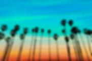 Valta Management-Palm Trees in Camarillo