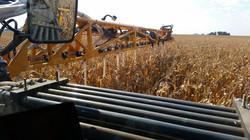 FTA custom seeding ProHarvest Secure Blend with Hagie and inter-seeder attachment, mid-September, Ir