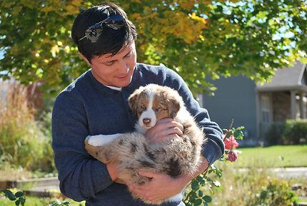 Copper Australian Shepherd Firestone Aussies Puppy