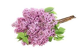 juilo-web-productdetail-lilac.jpg