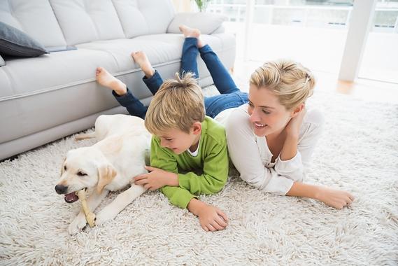 carpet-cleaning In Avignon, nettoyagede tapis à domicile à Marseille & Aix-en-Provence, PRESSING AUTO HABITAT CLEAN